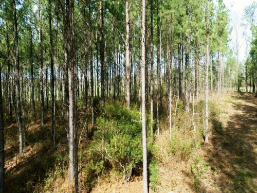 83+/- Acres : Davenport : Montgomery County : Alabama