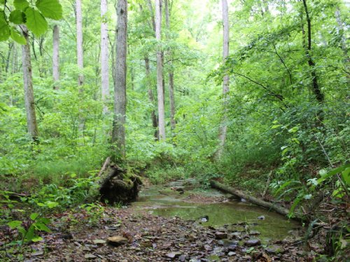 Hiles Rd - 52 Acres : Lucasville : Scioto County : Ohio