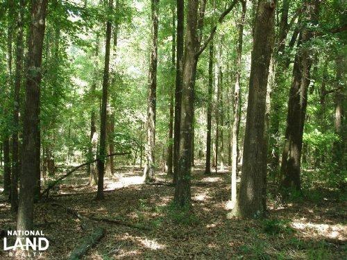 Dallas County Hunting Tract : Minter : Dallas County : Alabama