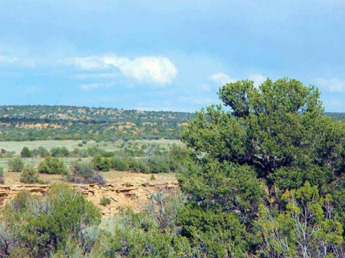 Secluded Northern Az Ranch $245 Mo : Saint Johns : Apache County : Arizona