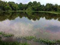 County Road 2276 Tract : Glenwood : Pike County : Alabama