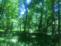 38.47+/- Acres Wooded Hunting : Tracy City : Grundy County : Tennessee