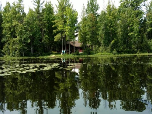 165 Acre Hunter's Paradise : Irons : Mason County : Michigan