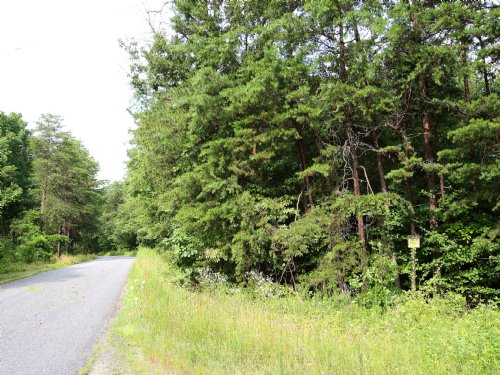 20+ Acre Building Lot : Louisa : Virginia