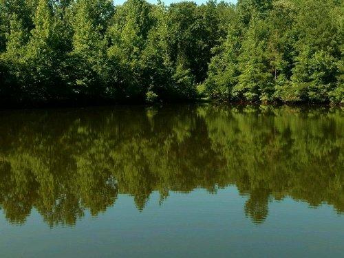 Cargle Creek Mini-Farm : Clanton : Chilton County : Alabama