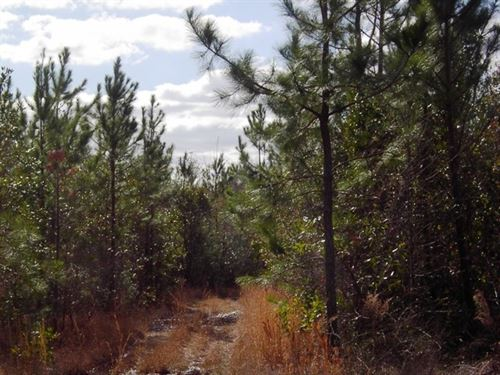 LA Hwy 21, 108686 : Angie : Washington Parish : Louisiana