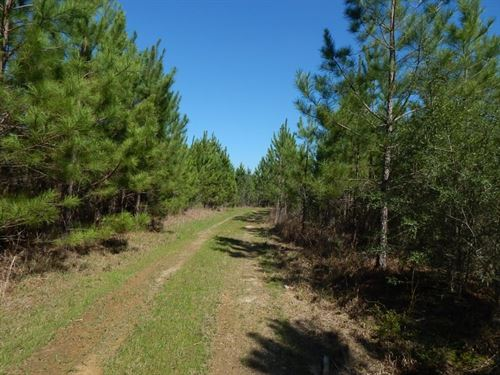 Hammond Road - 123588 : Prentiss : Jefferson Davis County : Mississippi