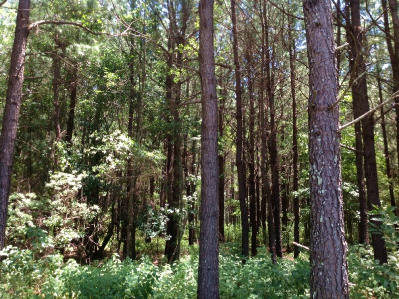 1009 Acres Of Hunting & Timber Land : Midway : Bullock County : Alabama
