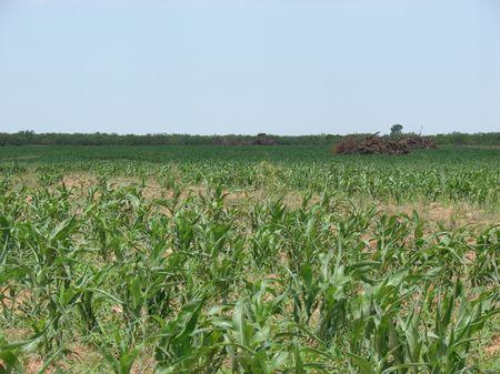 Walker Canyon Ranch : Matador : Motley County : Texas