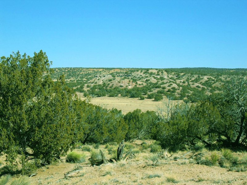 Secluded High Country Ranch : Saint Johns : Apache County : Arizona