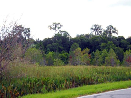 Lake Lowery 40 Acres : Haines City : Polk County : Florida