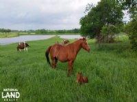 Moore Ranch - 6j Paint Horses