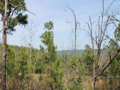 15.03 Acres Indian Ridge Ii : Daisy : Pittsburg County : Oklahoma