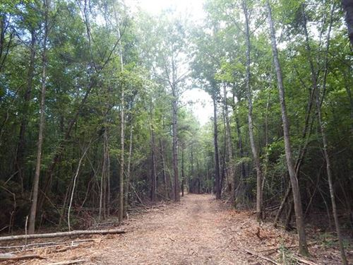 60 Ac 7 Miles West Of Folsom, La : Loranger : Tangipahoa Parish : Louisiana