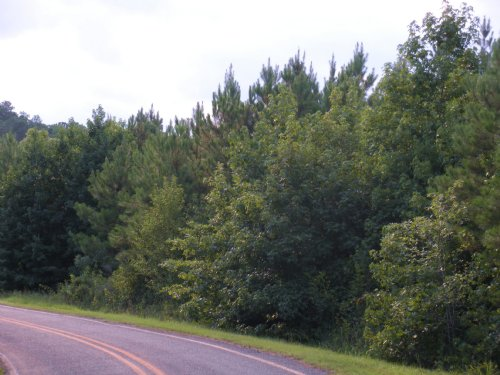 Jones Creek Tract : Morven : Anson County : North Carolina