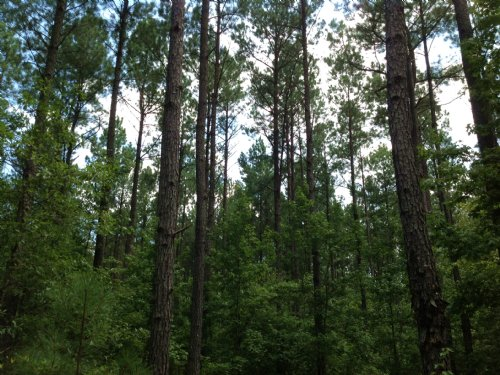 89 Acres In Suttle : Suttle : Perry County : Alabama