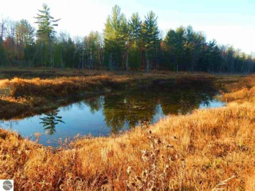 85 Acres With Ponds And Hardwoods : Manton : Missaukee County : Michigan