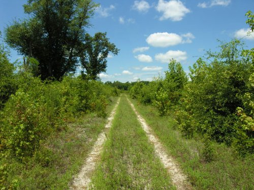 Reduced 207 Acres Wooded : Sardis : Burke County : Georgia