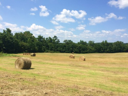 20 Acres On A Hilltop : Troy : Pike County : Alabama