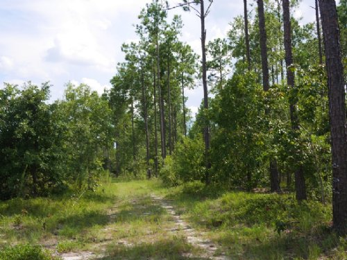 69 Acres - Rabitsch Rd : Millen : Jenkins County : Georgia