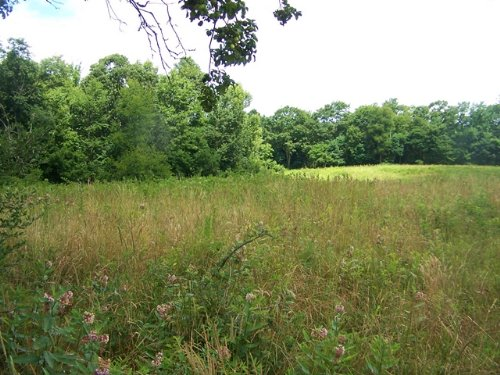 Acreage Joining Jefferson N. Forest : Troutdale : Grayson County : Virginia