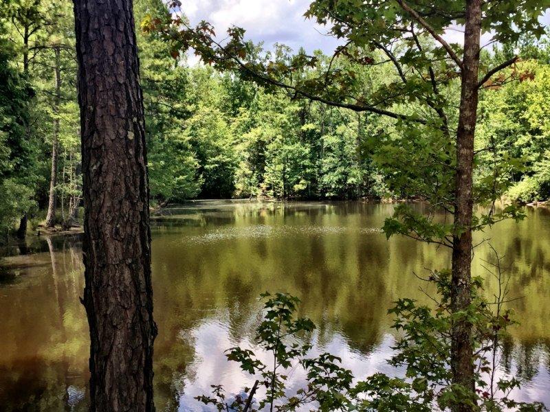 Pond Pasture Long Road Front : Macon : Jones County : Georgia