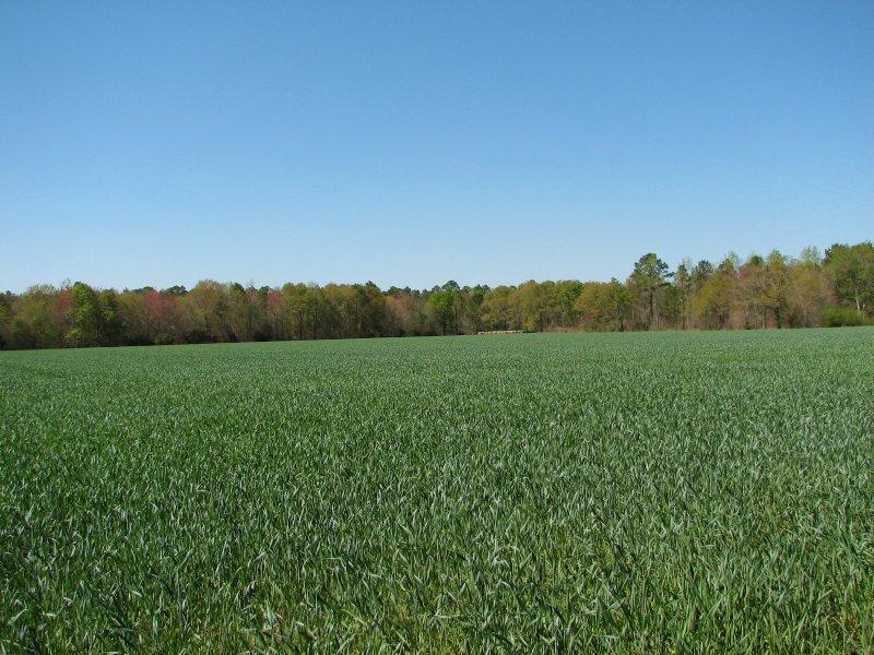 20 Acres +/- : Brooklet : Bulloch County : Georgia