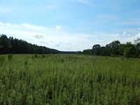 Turn-Key: Hunting & Timber : Tennille : Johnson County : Georgia