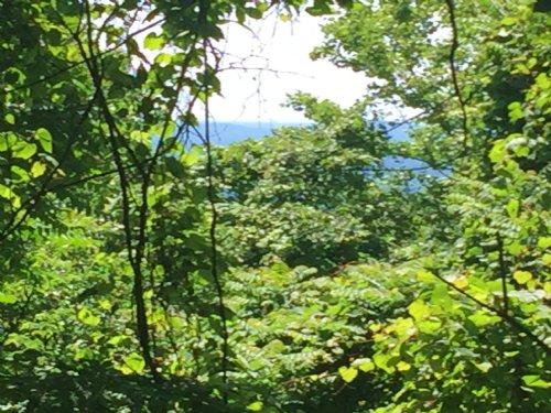 Taylor Mountain Road 1 : Stanardsville : Greene County : Virginia