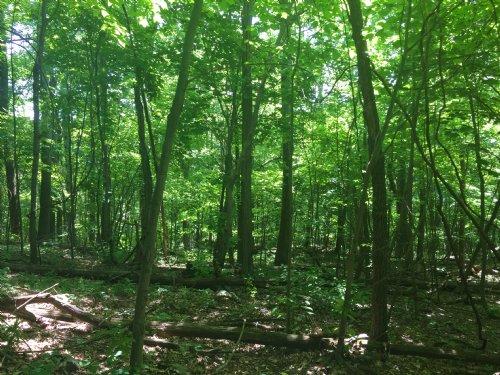 Taylor Mountain Road 3 : Stanardsville : Greene County : Virginia