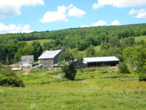 175 Acres Former Dairy Farm Pasture : Bovina : Delaware County : New York