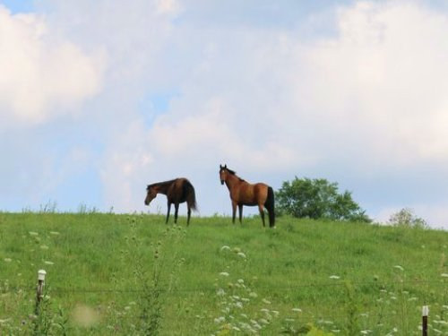 40 Acre Equestrian Center : Belleville : Dane County : Wisconsin