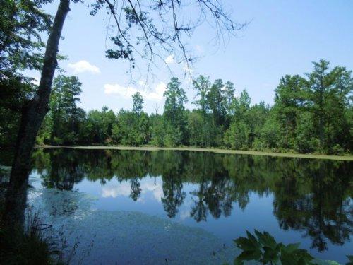 Edna Joy Short Tract : Carthage : Moore County : North Carolina