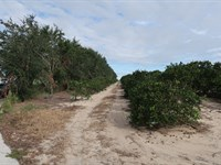 212 Acres Ready To Develop : Lake Placid : Highlands County : Florida