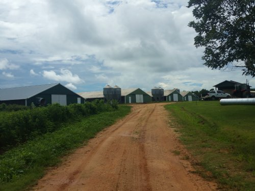 9 House Poultry Farm On 38+/- Acres : Chancellor : Geneva County : Alabama