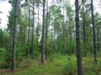 Underwood Heirs Tract : Carthage : Moore County : North Carolina