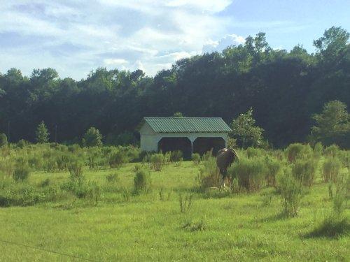 20.33 Acres : Eastover : Richland County : South Carolina