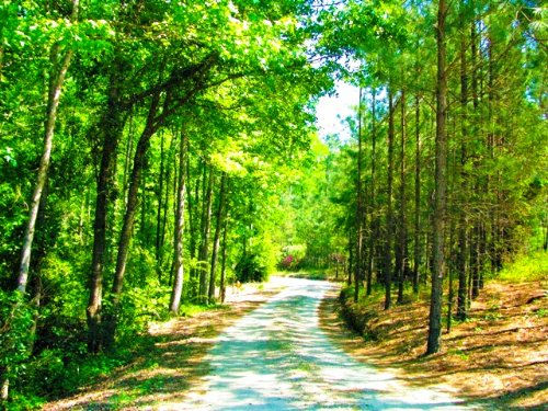 61 Acres - Winchester Farm : Sylvania : Screven County : Georgia
