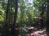 Shinglepile Branch Tract