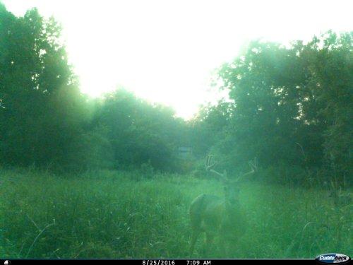 165 Acres Near Winnsboro : Winnsboro : Franklin Parish : Louisiana