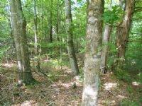 North Butler 400 : Greenville : Butler County : Alabama
