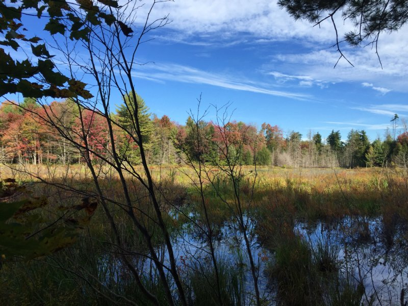 Tug Hill Hunting Land With Pond : Amboy : Oswego County : New York