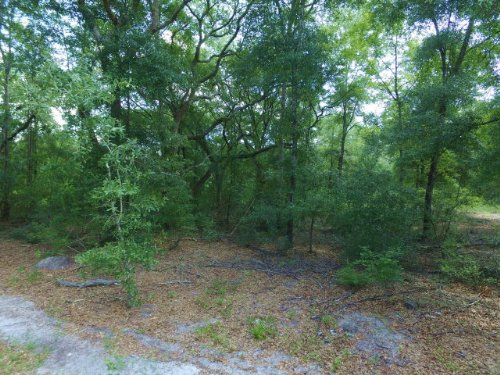 133+ Acres On Paved Road : Day : Lafayette County : Florida