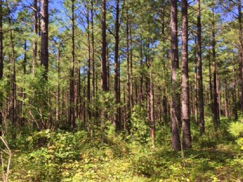 Tbc Timberlands : Moundville : Hale County : Alabama