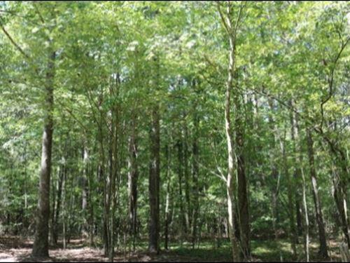 60 Acres With Home In Neshoba Count : Philadelphia : Neshoba County : Mississippi