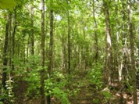 110 Acres Wooded, Brier Creek : Keysville : Burke County : Georgia