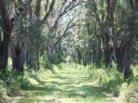 El Destino Plantation : Tallahassee : Leon County : Florida