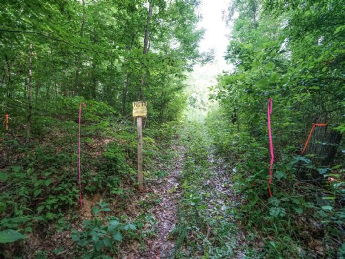 Buckeye Ridge Rd - 51 Acres : Stockport : Morgan County : Ohio