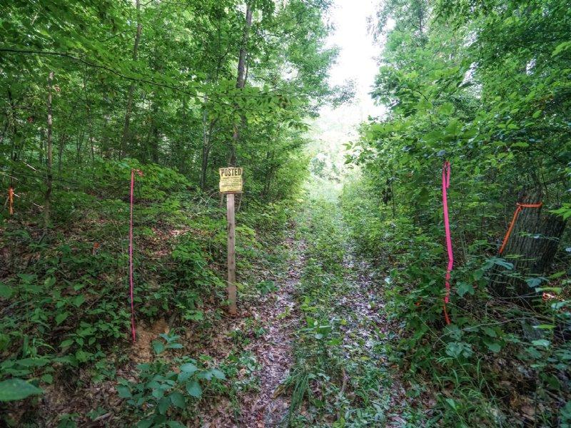 Buckeye Ridge Rd - 51 Acres : Stockport : Morgan County : Ohio