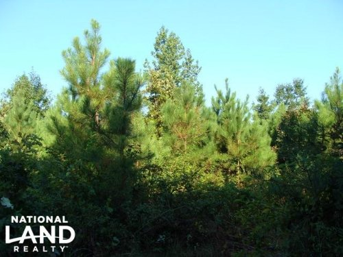 40 Acre Cut-Over Timberland : Rison : Cleveland County : Arkansas